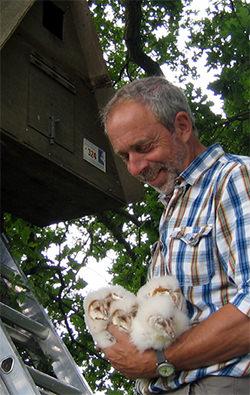 Colin with wild barn owls thanks to the BOCN nest box scheme.